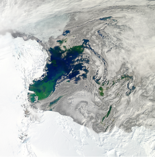 Satellite image of our study region in the Ross Sea during summer, with large phytoplankton blooms clearly visible in green (image: NASA).