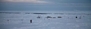 The beginning of our first ice station, with the Biogeochemistry team setting up their station in the distance. They spend 8-12 hours sampling to thoroughly characterize the atmosphere, sea ice, and ocean below.
